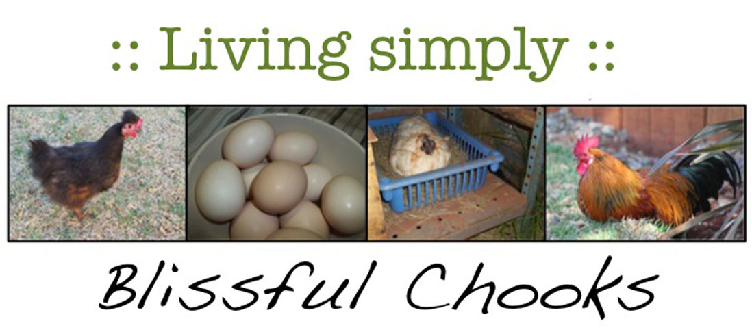 :: Blissful Chooks ::
