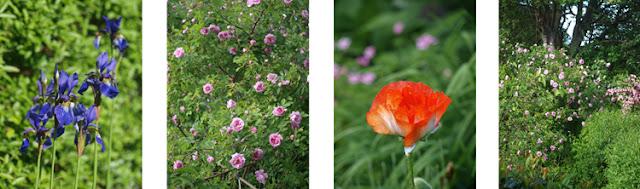 Blomster i den lilla have