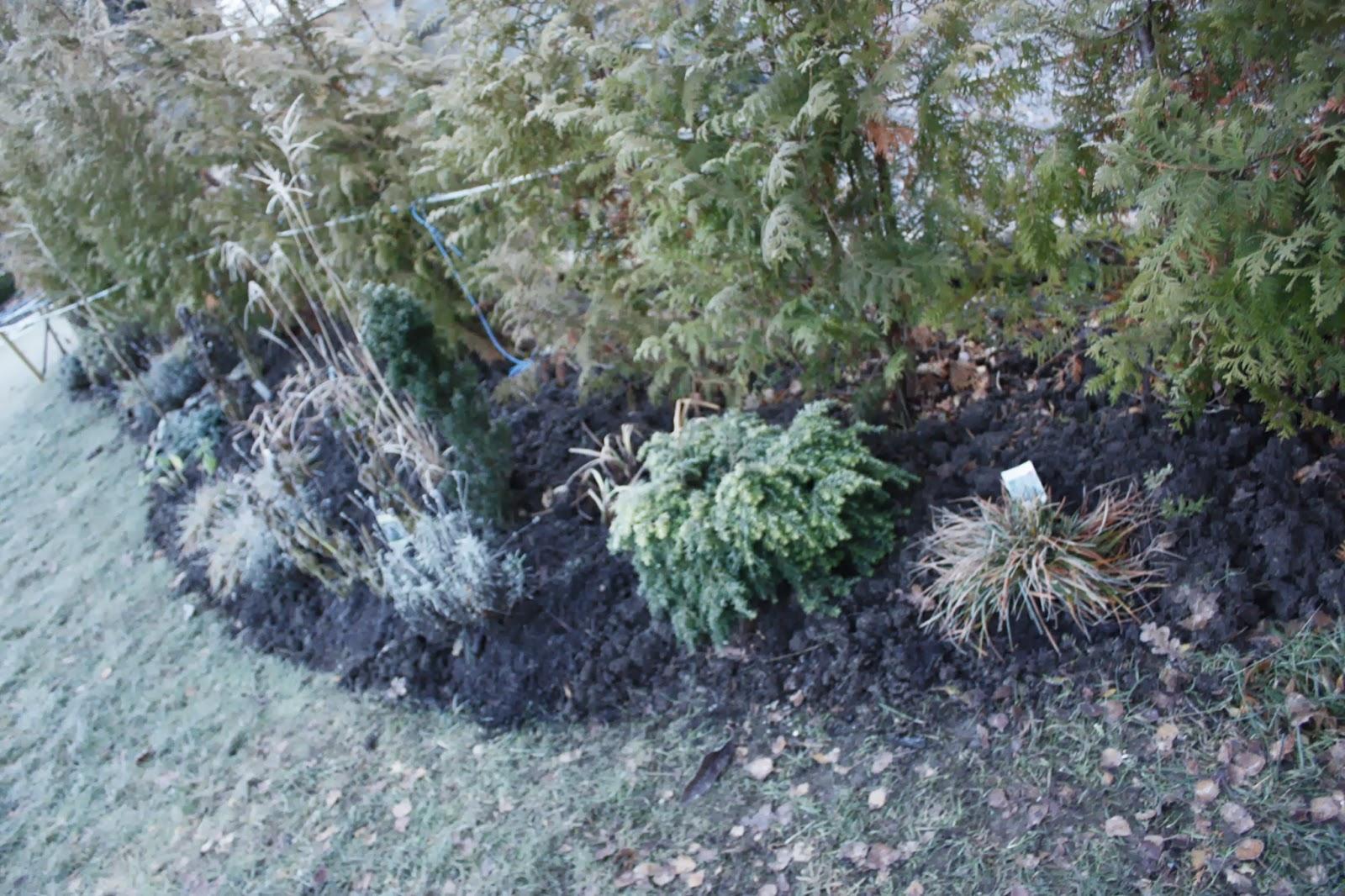Josefins trädgård: sista rabatten för i år   en typ mästarrabatt