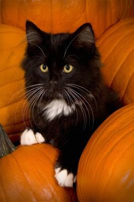 TheJungleStore.com Blog | Black Cat With Pumpkins