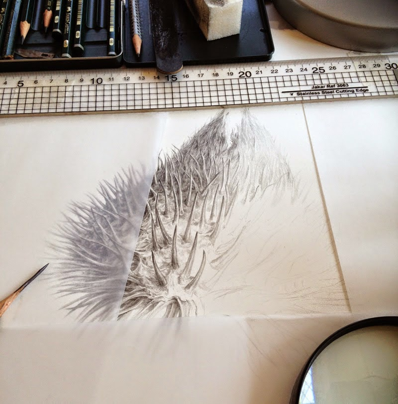 Ботаническая живопись