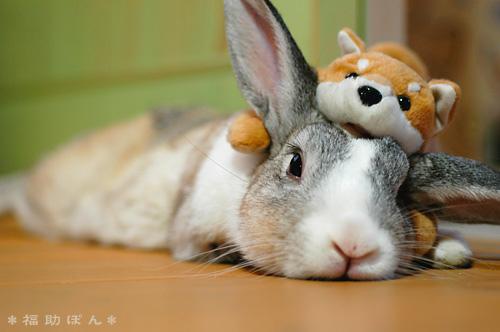 ANIMALES: LOS CONEJITOS SON UNOS ANIMALITOS MUY TIERNOS.....