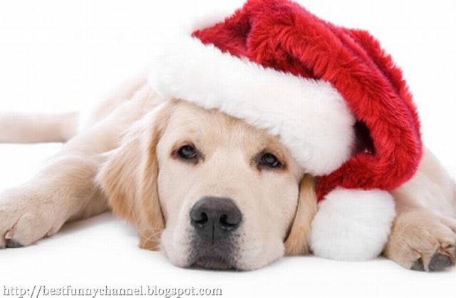 Beautiful dog in a red cap