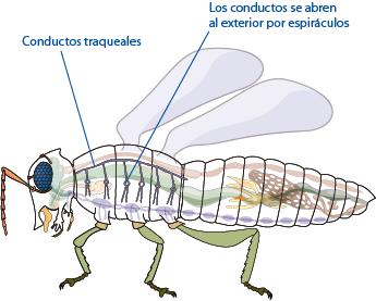 Insecto, Animal Imágenes gratis en Pixabay - imagenes de animales insectos