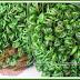 Sayur Popular Di Sarawak