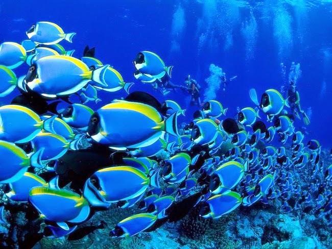 أجمل الأسماك الاستوائية الملونة   - صفحة 4 Colorful-tropical-fishes-20