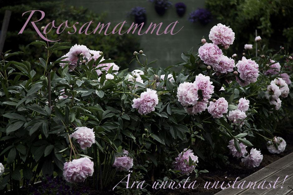 Roosamamma