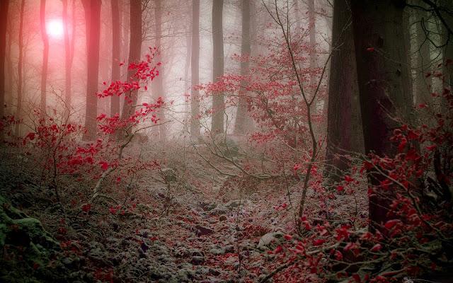 Foggy Forest Hd Desktop Background