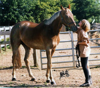Killian's Red, the best thoroughbred in the world