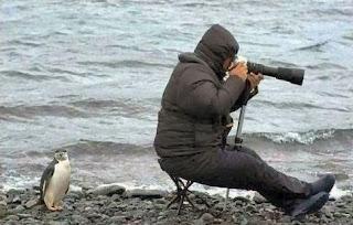 Pinguim engana fotografo