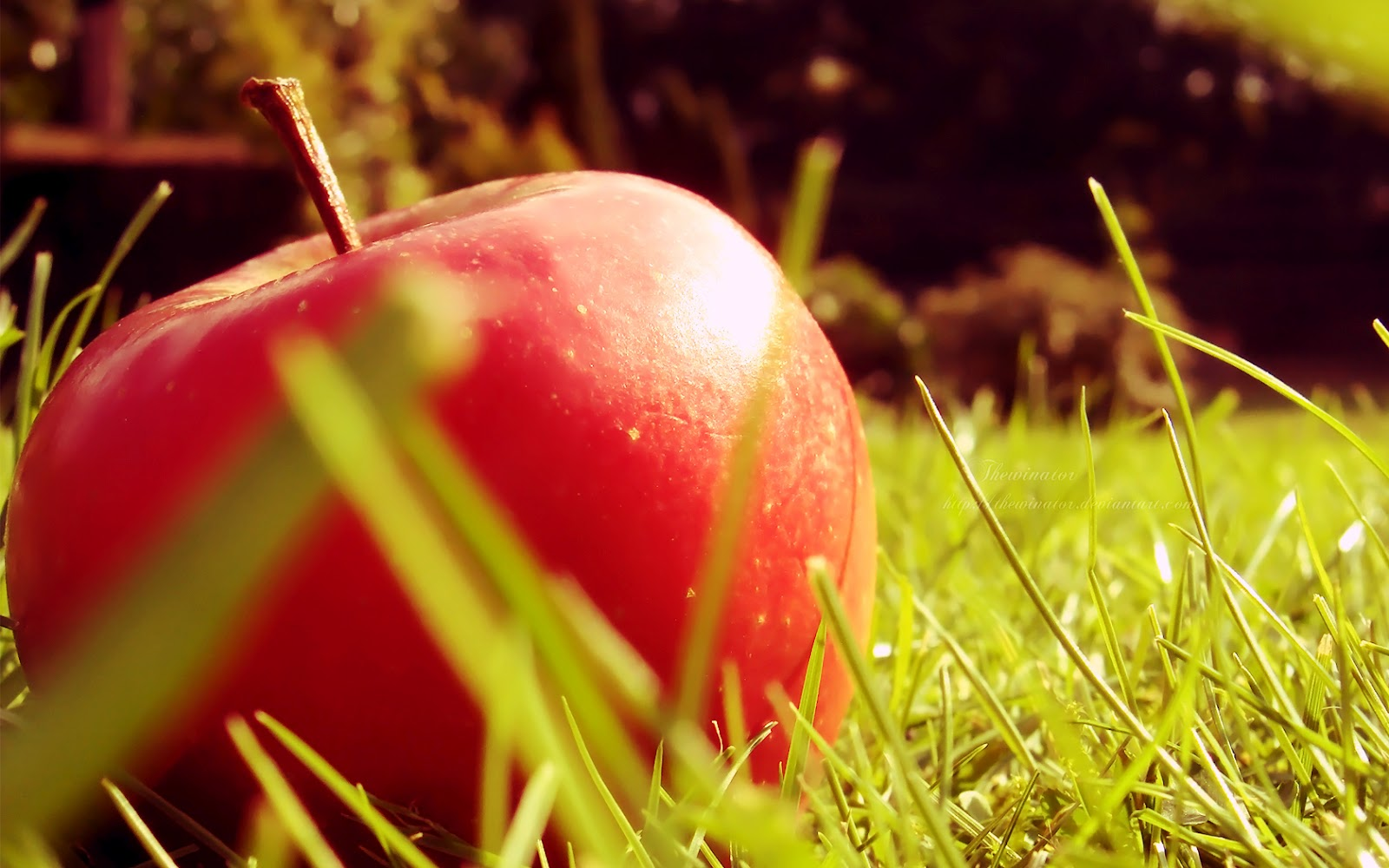 top 15 fresh and beautiful apple wallpapers in hd - warner buzz
