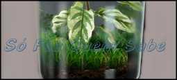 Coloque as plantinhas e os insetos e em seguida tampe bem vedado