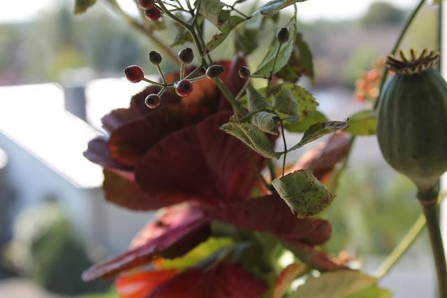 Herbstblumen Fensterbank