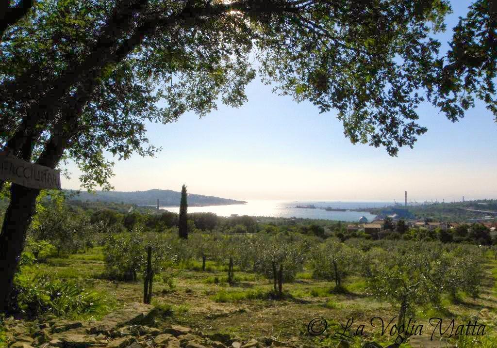 uliveto Fiorosso a Trieste