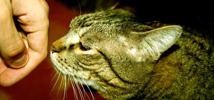 Kucing menghidu tangan manusia