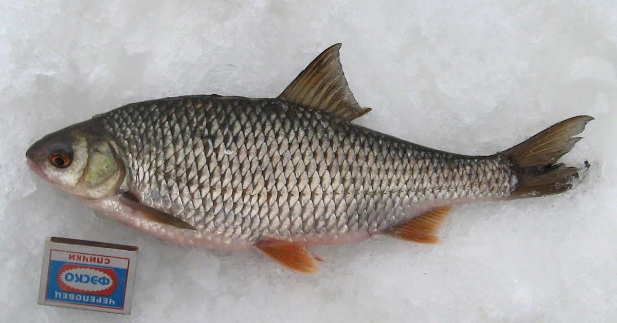 где клюет рыба в кировской области