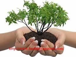 10 Pengertian Definisi Lingkungan Menurut Para Ahli