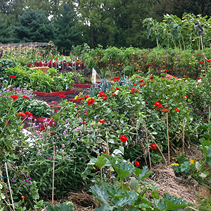 The gardening apprentice 7 secrets for a high yield for Great vegetable garden ideas
