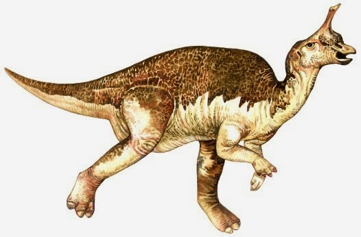 Tsintaosaurus dildo head