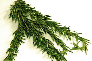 manfaat daun rosemary