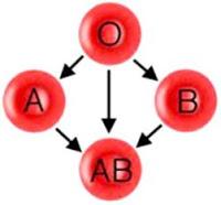 tips-cepat-hamil-berdasarkan-golongan-darah