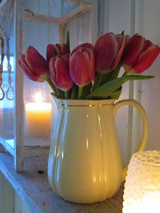 Tulipaner i januar