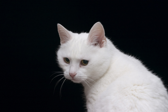Ilmoita kissan katoamisesta kanssaihmisille