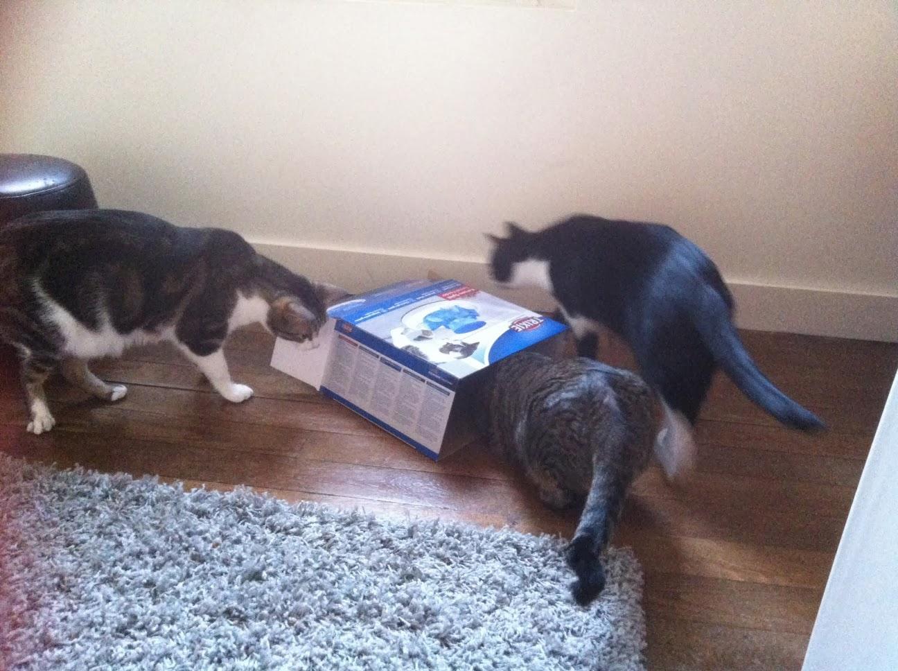 jouet ludique pour chat