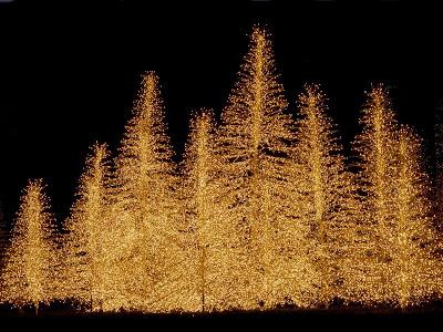Papel de Parede Árvore de Natal Iluminada