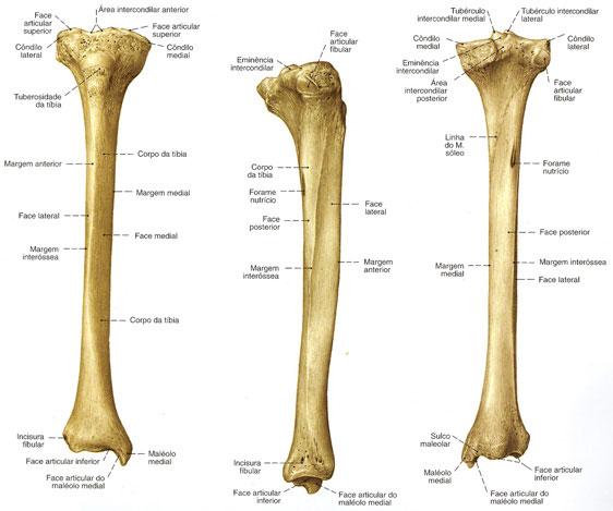 Anatomía aplicada a la Fisioterapia: Caso clínico: fractura tibia y ...