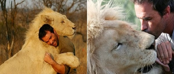 Man Attempts To Hug a Wild Lion. What Happens Next?