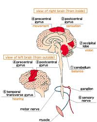 dysarthria understanding and definition of the dysarthria causes of the dysarthria