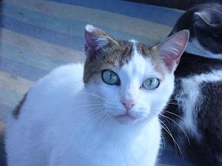 Iniziative gattile a m a amici del mondo animale onlus