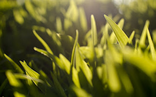 Photo Macro Grass Plants Herbs Green Light Rays HD Wallpaper