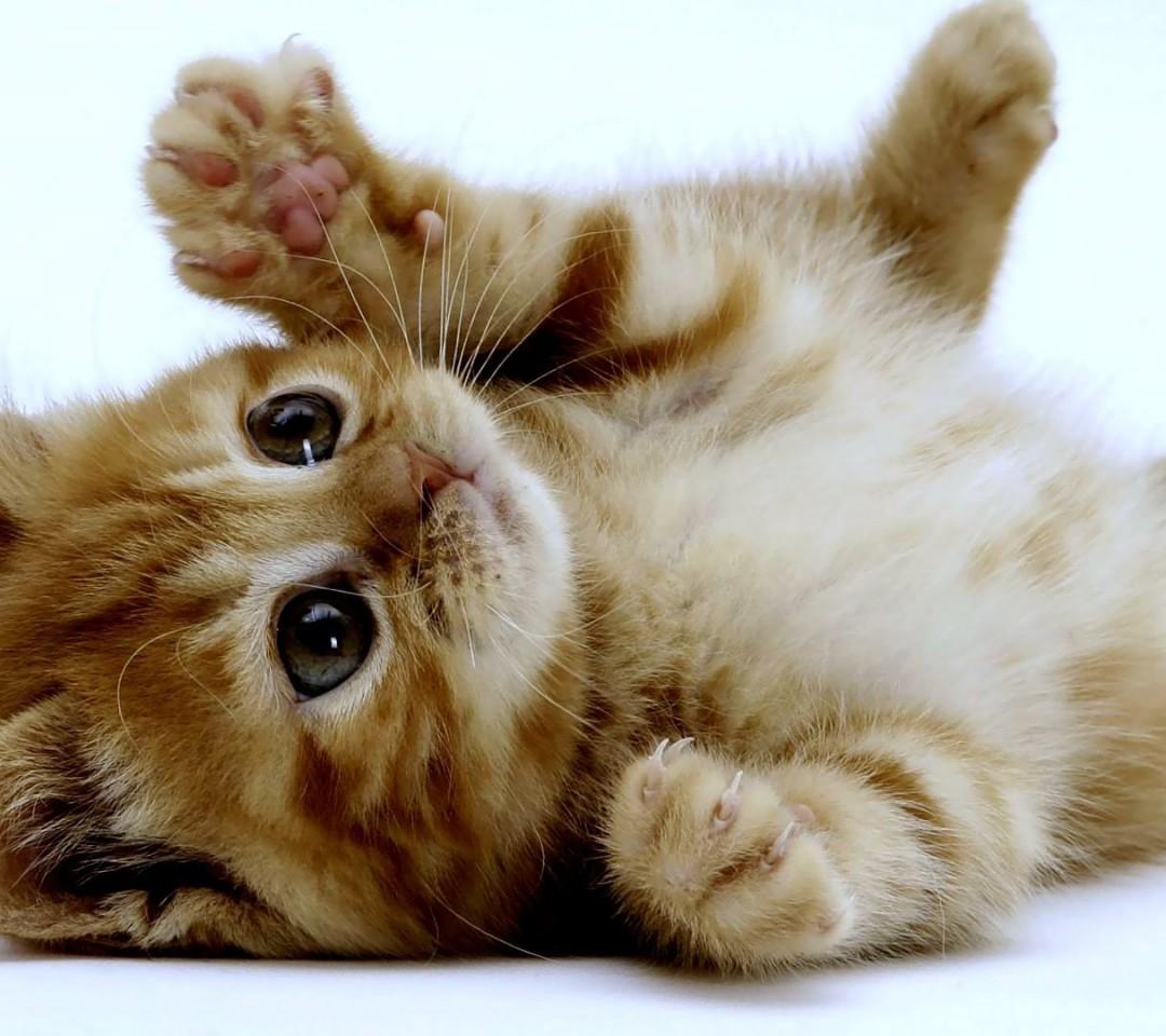 Voordierenblogger  Poeh, poeh, zo,zo!! Eindelijk een actie tegen het kattenoverschot in