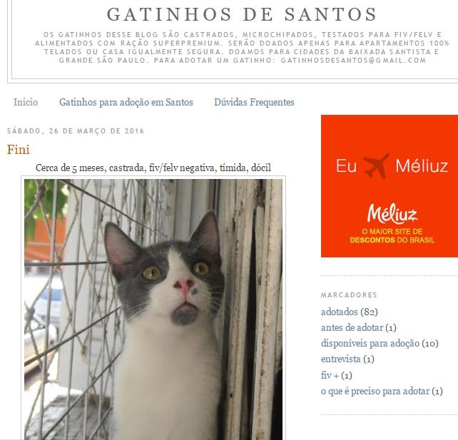 Conheça o blog Gatinhos de Santos!