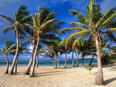 Prylmani 10 snygga bakgrundsbilder till din pc - Tipi di palma da giardino ...