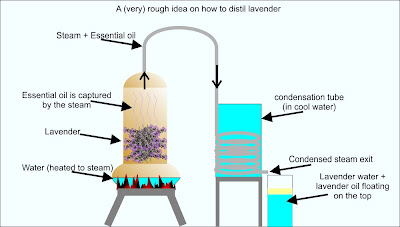 How to distil lavender