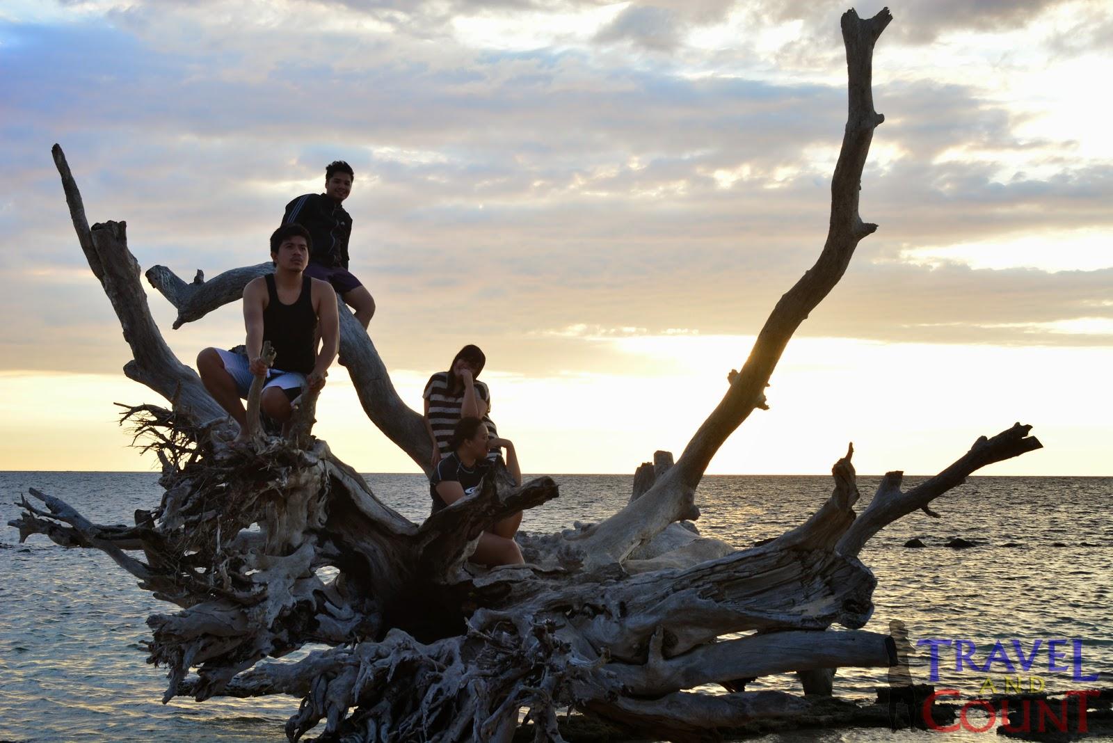 Famous Tree in Potipot Island Zambales