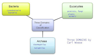 Three domains classification by Carl Woese