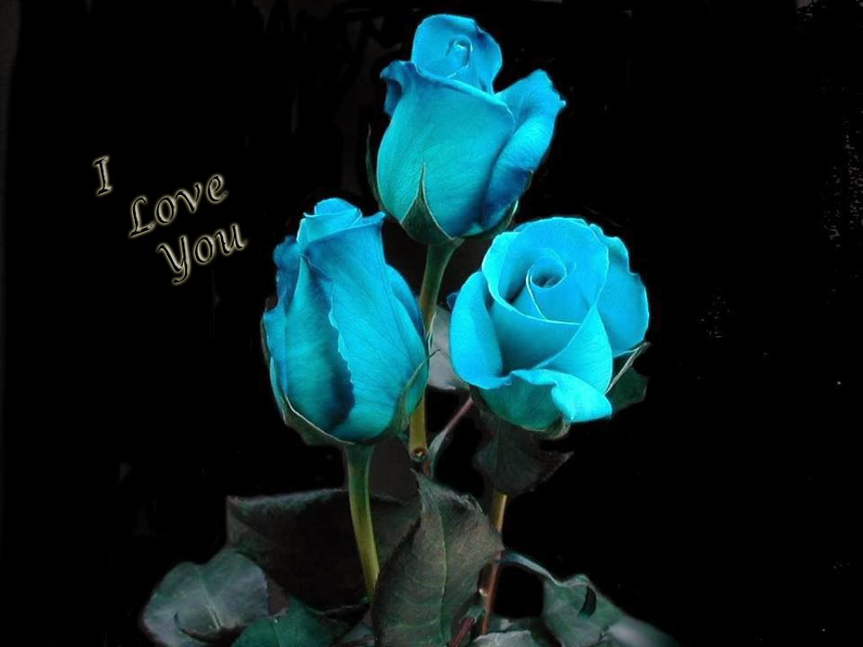 i love u light blue rose wallpaper