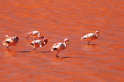 La Laguna Colorada Bolivia