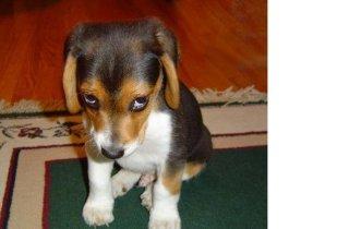 funny+dog+images
