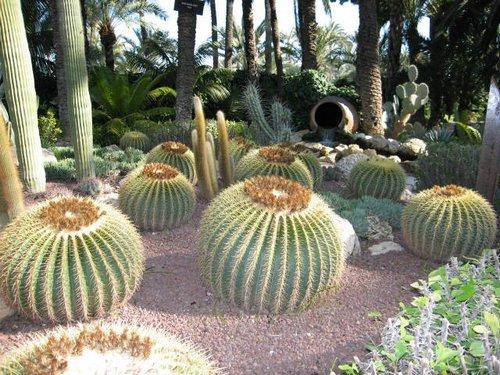 Cactus cuidado de plantas for Cactus cuidados exterior