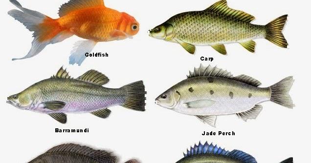 Prepper folks types of fish for aquaponics for Catfish aquaponics