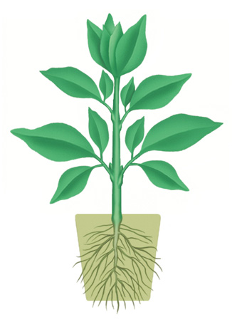 To obtain an attractive appearance pots and plants that grow