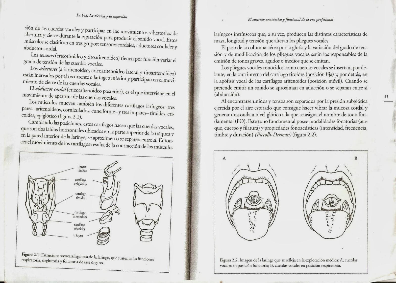 Expresión Corpovocal FEDA: MAS SOBRE ANATOMÍA, FISIOLOGÍA Y TEMAS DE ...
