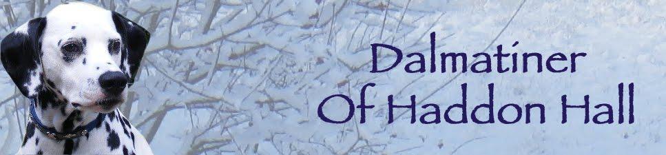 Dalmatiner of Haddon Hall