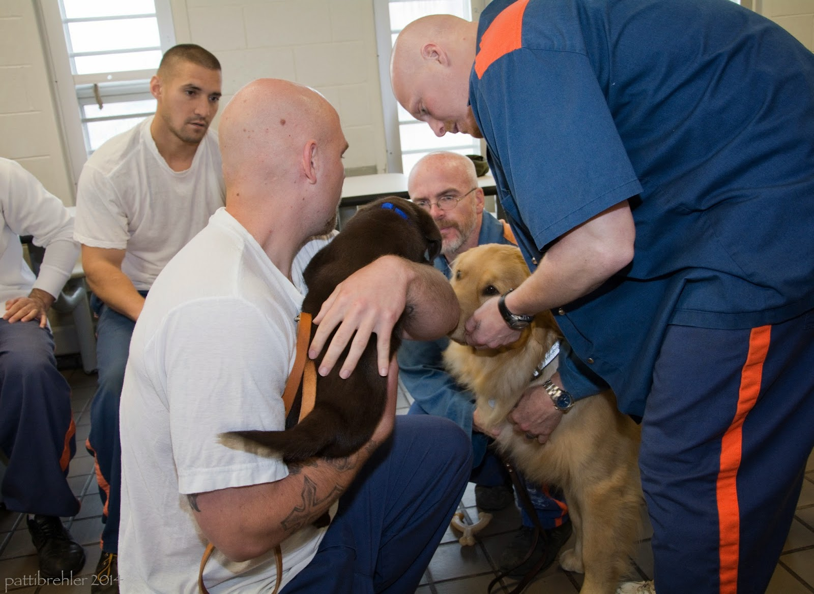 The bald man in the white t-shirt is holding the chocolate lab puppy and facing away from the camera, and squatting down to have the puppy meet a large golden retriever that is sitting on the tile floor. A man wearing the prison blue and orange uniform is standing up and bending over to look at the puppy on the right side. Another man in the background between them is squatting down, only his face is visible. A fourth man is sitting in the background to the left, looking at the puppy. He is also wearing a white t-shirt.