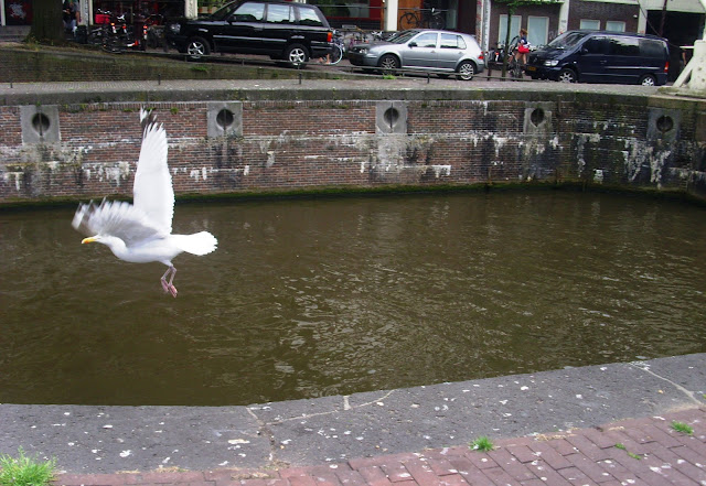 Seagull in Amsterdam